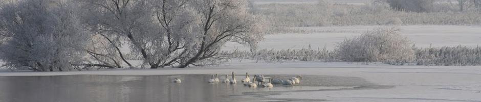 Winter im Oderbruch